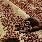 feves de cacao madagascar