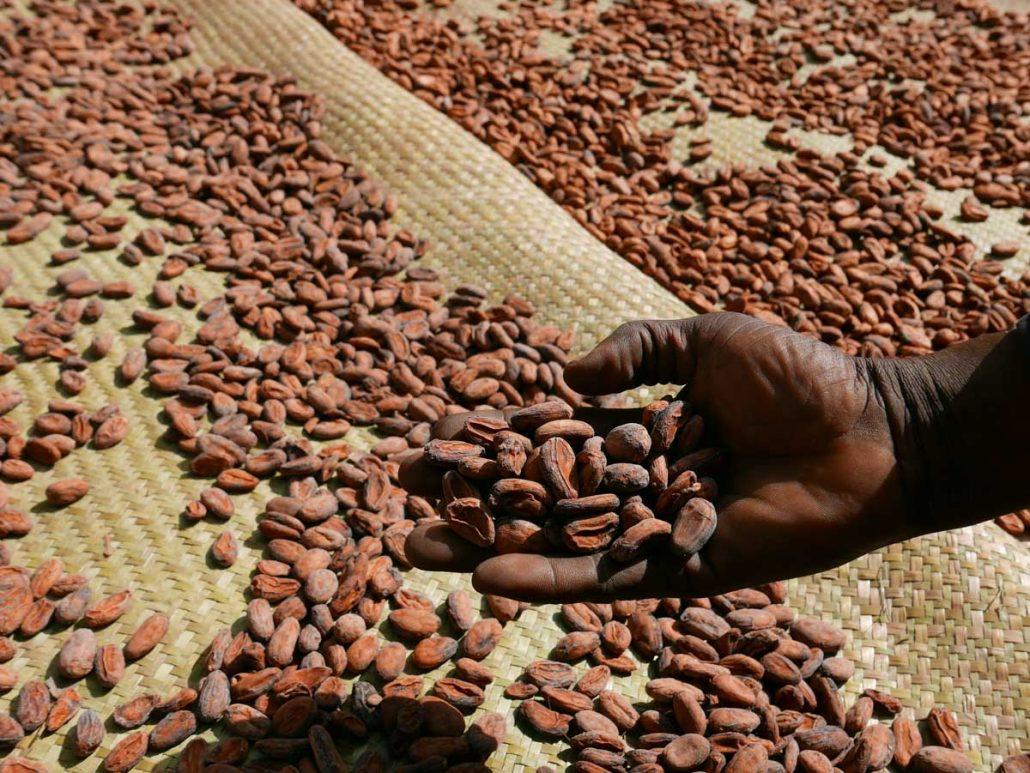 cocoa bean madagascar