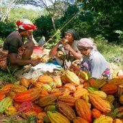 jour-2-dans-les-plantations-ecabossage